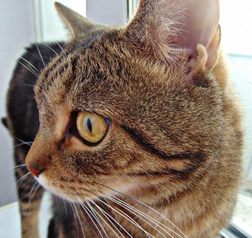 усатик Котик пупсик кот котэ Природа няша😺