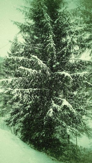 Editing...Abstract Backgrounds No People Refreshment Close-up Water Indoors  Nature Day Artistic Eye Snow Falling Snow Falling Snowflakes Tree Falling Snowwwwwww ❄❄❄❄❄❄❄❄❄❄❄❄❄ Wandering Around Winter Winter Wonderland Cold Temperature Pinetrees🌲 Edited My Way Pinetrees Falling Snowflake Falling Nature