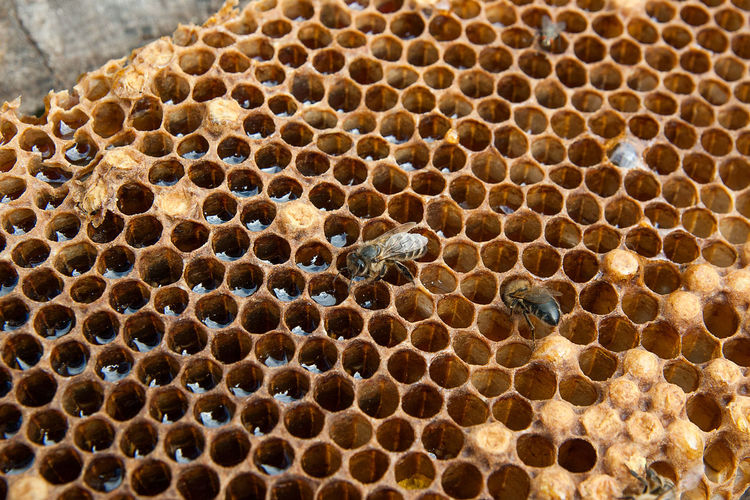 Animal Animal Themes Animal Wildlife Animals In The Wild APIculture Beauty In Nature Bee Beehive Close-up Group Of Animals Hexagon Honey Honey Bee Honeycomb Insect Invertebrate Natural Pattern Nature No People Pattern