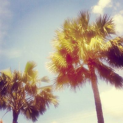 its summer do not rain please:) Tree Palm Beach Sky Skymadness Beautifulsky Picoftheday Photooftheday Pictureoftheday Instadaily Instanesia Instanusantara California Bali INDONESIA LangitBaliPhotowork