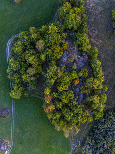 Nature patterns in autumn Aerial View Autumn Autumn Colors Beauty In Nature Botany Branch Close-up Day Drone  Dronephotography Fragility Freshness Green Green Color Growth Lush Foliage Nature No People Scenics Sea Single Tree Tranquil Scene Tranquility Tree Tree Trunk