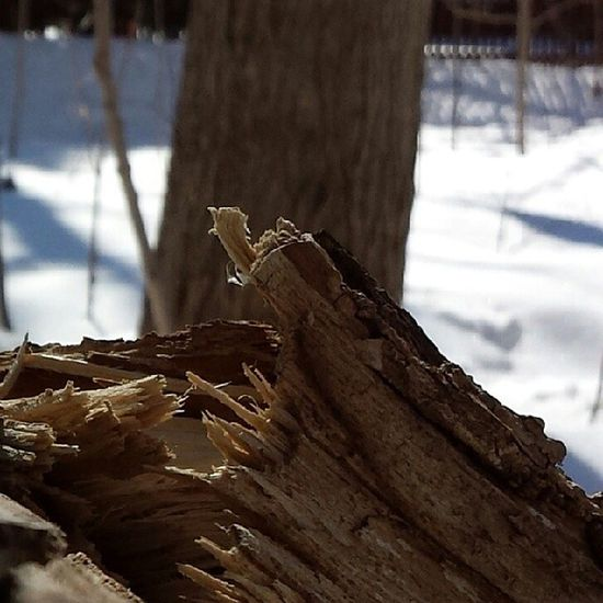 broken wood Wood Broken Beautiful Perfect_shot nature photographer photo snow macro