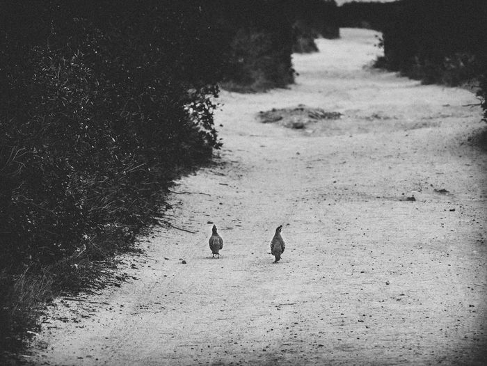 Animals In The Wild Black & White Land Nature Nature Photography Portugal Travel Travel Photography Traveling Animal Themes Animal Wildlife Bird Black And White Blackandwhite Blackandwhite Photography Bnw Cavaleiro Day Nature_collection Naturelovers No People Outdoors Photography Selective Focus Travel Destinations