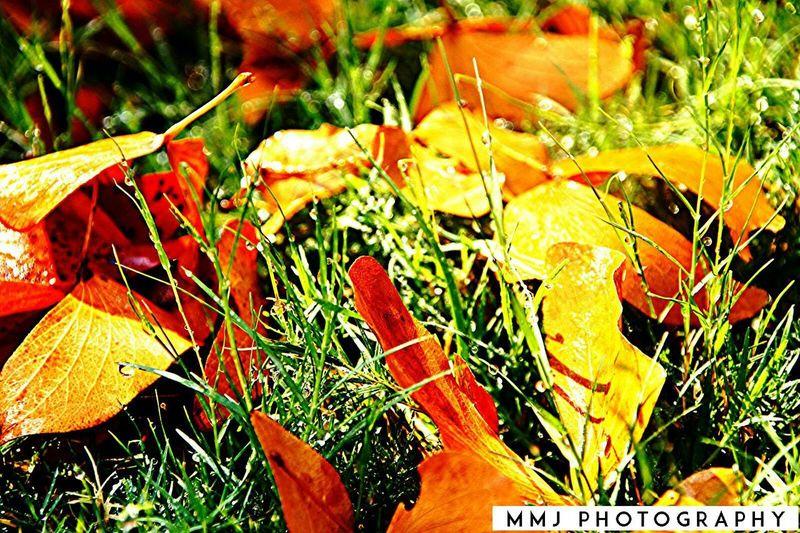 Photography MMJ PHOTOGRAPHY Nature Photography