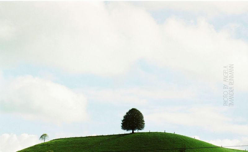 LANDSCAPE Artphotography Poetry & Photography Language Landscape Landscape_photography Landscape Minimalism Tree Baum Lanfschaft Landschaftsfotografie Arbre Cloud - Sky Growth Tree Nature Sky Day Outdoors Beauty In Nature No People
