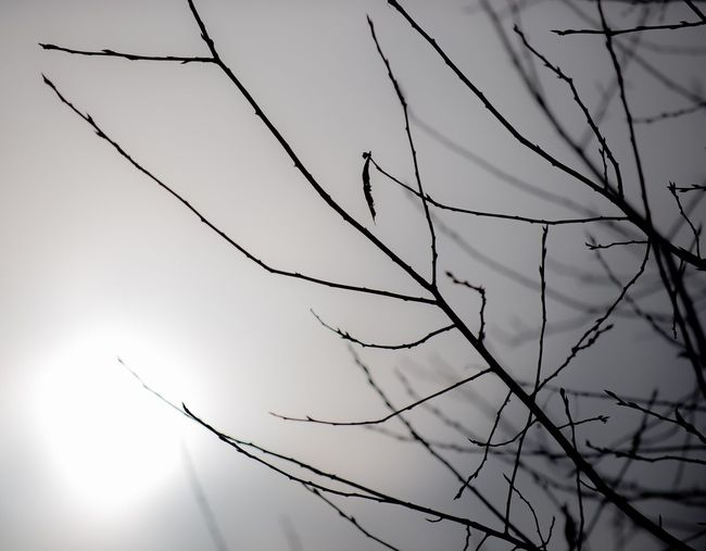 Low angle view of twigs