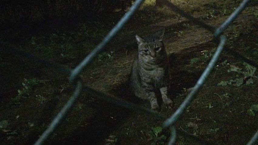 野良猫 Stray Cat 夜ねこ キジトラ 走り猫 一時避難w