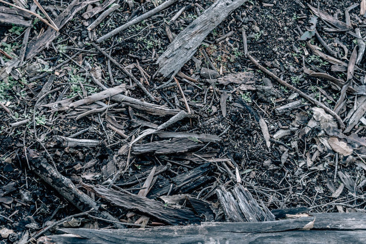 Land Plant Nature No People Day Twig High Angle View Plant Part Field Tree Close-up Root Messy Dry Outdoors Tranquility Forest Wood - Material Stick - Plant Part Leaf Dead Plant Tangled