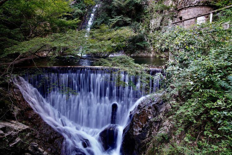 Nunobiki Falls - Mentaki Kobe Japan Nunobiki Falls Mentaki Water Plant Tree Waterfall Motion Scenics - Nature Beauty In Nature Long Exposure Flowing Water Forest Nature Blurred Motion Green Color Outdoors