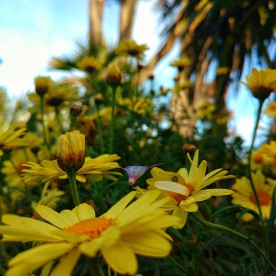 Depth PERCEPTION Flower Growth Nature Beauty In Nature Plant Fragility Outdoors No People Petal Close-up Day Freshness Yellow Flower Head Focus On Foreground Sky