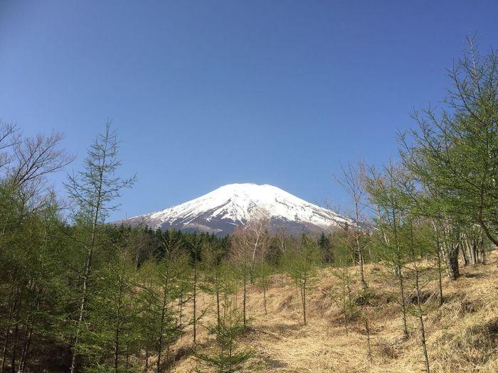 2018.04.29 #富士山 富士山 Sky Plant Beauty In Nature Mountain Tree Nature Clear Sky