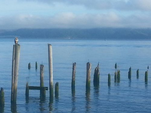 Sea Water Outdoors No People Cloud - Sky Nature Horizon Over Water Day Beach Landscape Sky Wooden Post Water's Edge Astoria, Oregon Astoria, OR Northcoastrecovery Columbia River Reflection Bird Photography Eagle Eaglet Beauty In Nature Tranquility Nature Tranquil Scene