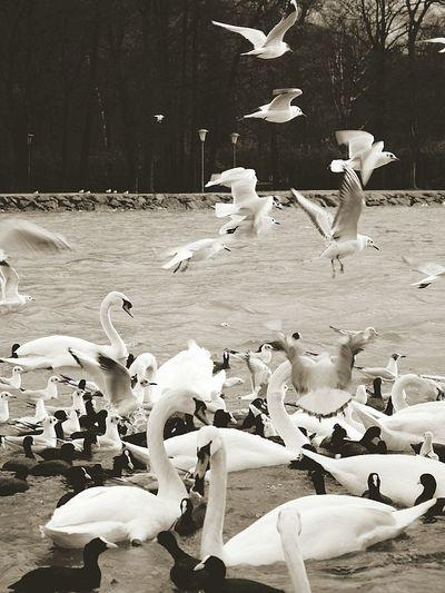 Motus Natura Landscape #Nature #photography Animals