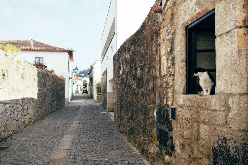 stray cat for the #InternationalCatDay Architecture Building Built Structure Cat Diminishing Perspective Hikinggalicia Mammal No People Outdoors Pets Portugal Residential Building Residential District Residential Structure Stray Cat The Way Forward Vanishing Point Walkway Long Goodbye