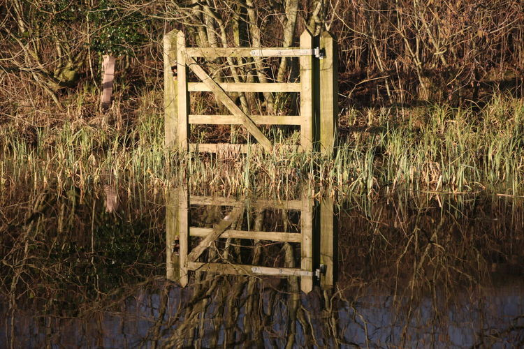 Canon 5D Mark II Brockholes Close-up Day Gate Lone Gate Nature No Fence No People Outdoors Reeds Reflection Water Pond Pond Reflections Tranquility Sunshine Sunlight Sun Effects