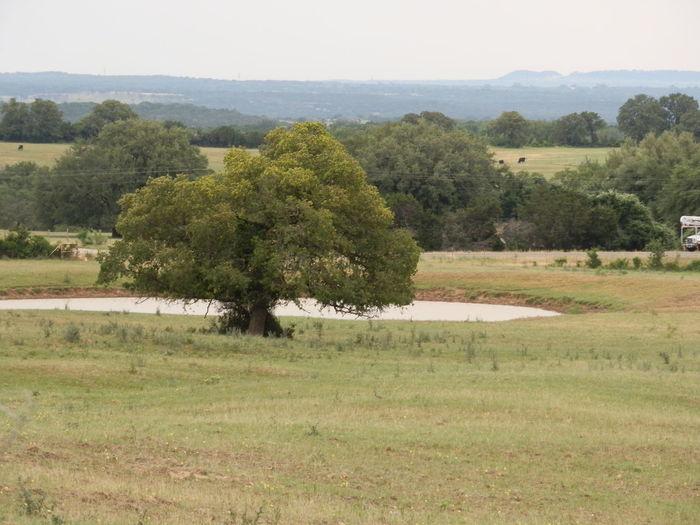 #outdoors #trees Amazing Dallas Tx Mellowday Nature Picmoment Worldofgreen