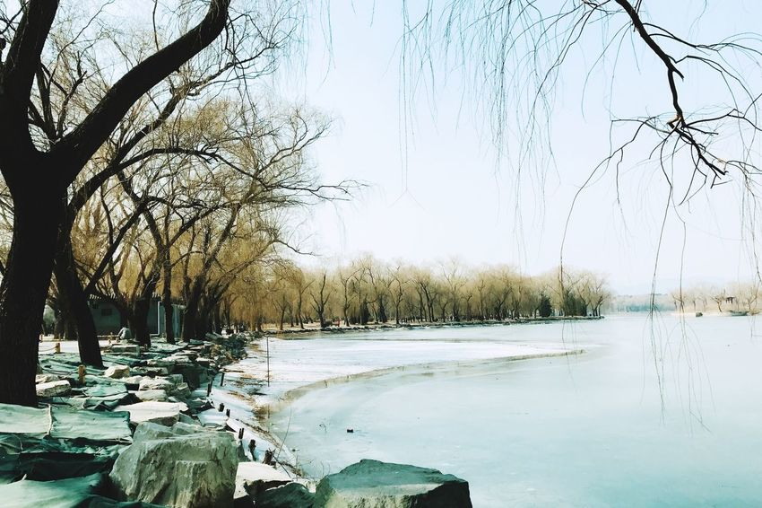 Winter Cold Temperature Lake Branch Frozen Outdoors Landscape Clear Sky
