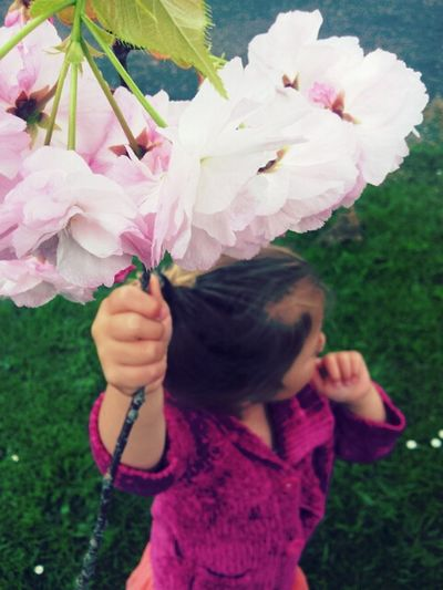 my photography :) Follow Flower Nature Pretty