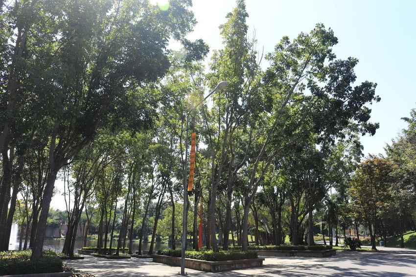 อุทยานหลวงราชพฤกษ์ อุทยานหลวงราชพฤกษ์ ราชพฤกษ์ Tree Plant Growth Nature Beauty In Nature Direction Road Day No People Street Tranquility The Way Forward Footpath Outdoors Green Color Treelined Sky Park Scenics - Nature Transportation