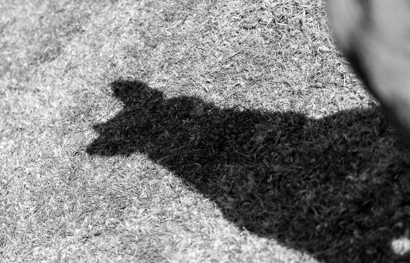 With great shadows comes great responsibility Animal Themes One Animal Shadow Shadows & Lights Malinois Malinoislovers Malinois Dog Malinoispuppy Blackandwhite Black Noir Et Blanc Blackandwhitephotography Maligator Malinoislife
