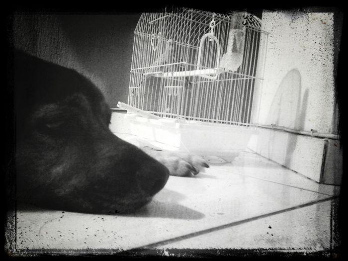 Friendship DogLove Mydog Riodejaneiro Recreio periquitos