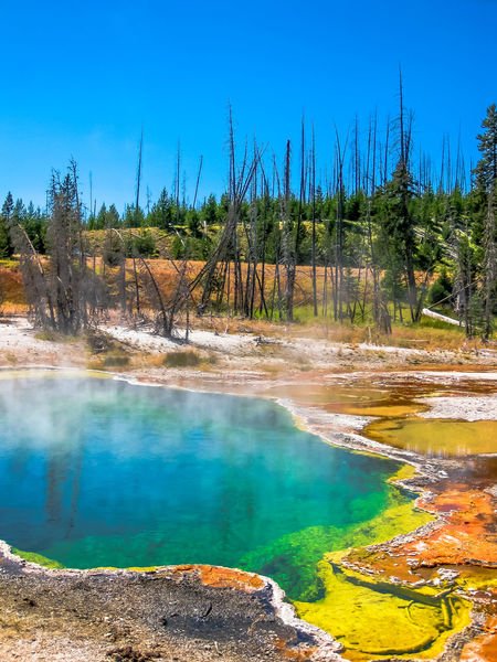Closeup of Morning Glory Pool, a hot spring in the Upper Geyser Basin in Yellowstone National Park, Wyoming and Montana, United States. Castle Geyser erupts with hot water and steam with pools of thermophilic bacteria and is a cone geyser in the Upper Geyser Basin of Yellowstone National Park, Wyoming, United States. Dramatic view of dead trees and travertine terraces rock formations made of crystallized calcium carbonate in Mammoth Hot Springs, Yellowstone National Park in Wyoming and Montana, United States. Gaiser Grand Prismatic Lake Wyoming Landscape Yellowstone Yellowstone National Park Yellowstone National Park. Beauty In Nature Blue Day Geyser Grand Prismatic Grand Prismatic Spring Hot Spring Lake Landscape Nature No People Outdoors Park Pool Scenics Sky Tranquil Scene Tranquility Tree Vulcano Water