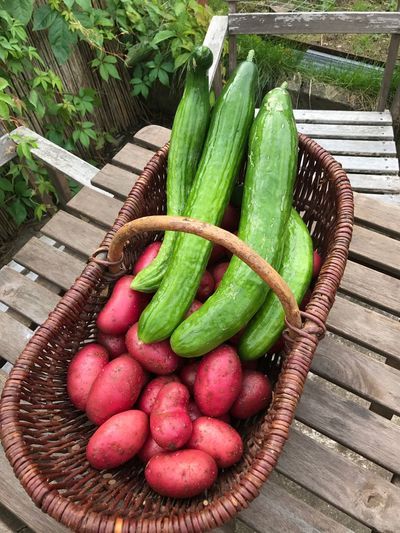 Green Color Vegetable Garden Photography Food And Drink Cucumbers Potatoes