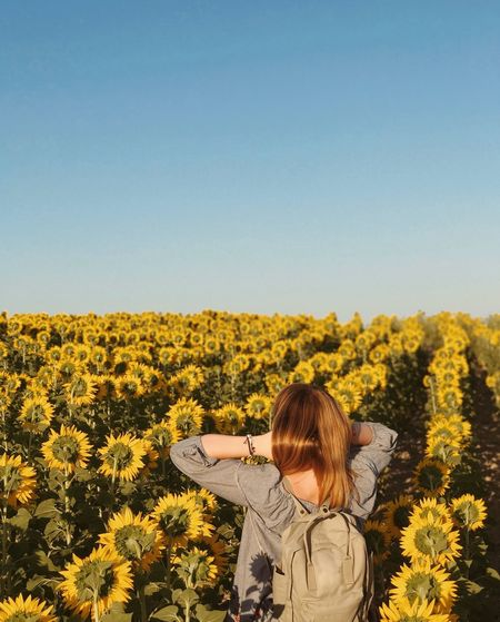 Rear view of woman standing on sunflower field against clear sky