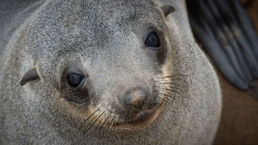 Close-up of animal head