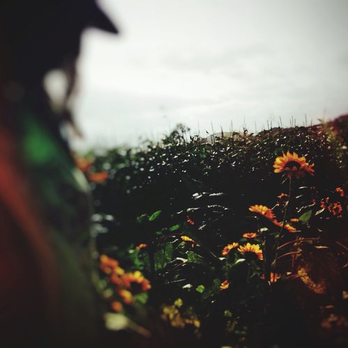 IPhoneography Nature EyeEm Nature Lover Sunflower Outdoors Blur NEM Self Self Portrait