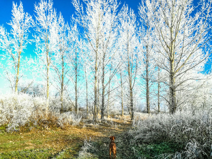 Landscape nature Backgrounds Sky Tree Beauty In Nature Outdoors No People