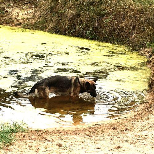 Janka a soif Animals dogs