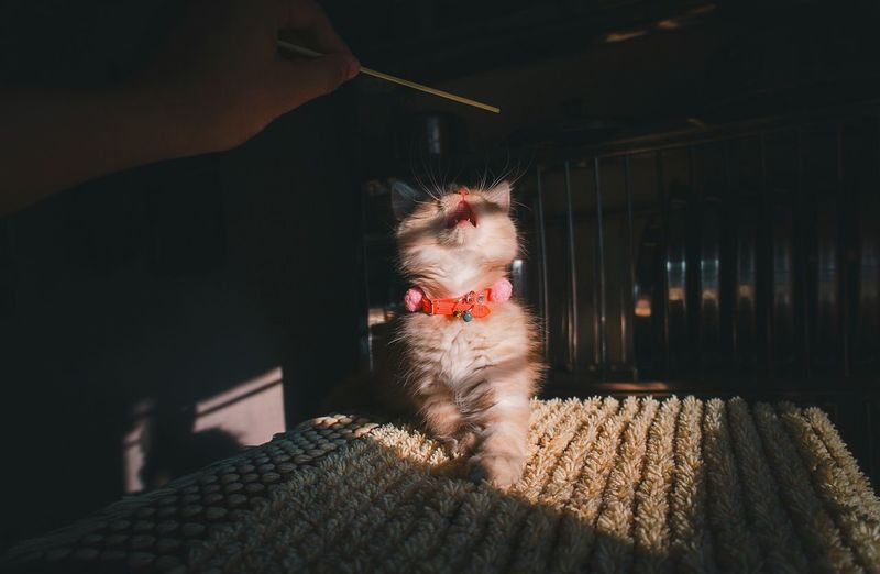 Cats Of EyeEm Catlovers Catportrait Animal Posing Animal Portrait Persian Cat  Pets Persian Cat  Cat Portrait EyEmselect Close-up EyeEm Selects Naturallight Natural Light Portrait Animalportrait Naturallightphotography Sunlight Cute Playtime