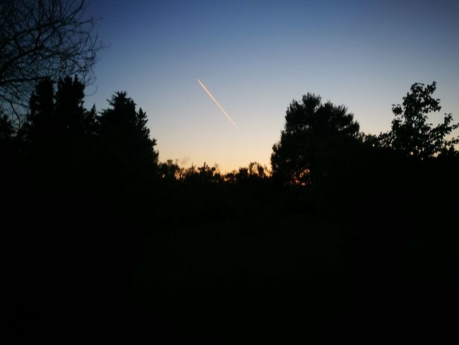 Tree Nature Beauty In Nature Scenics Sunset Outdoors Tree Area Vapor Trail BYOPaper! Clear Sky Countryside Plane Pinksky