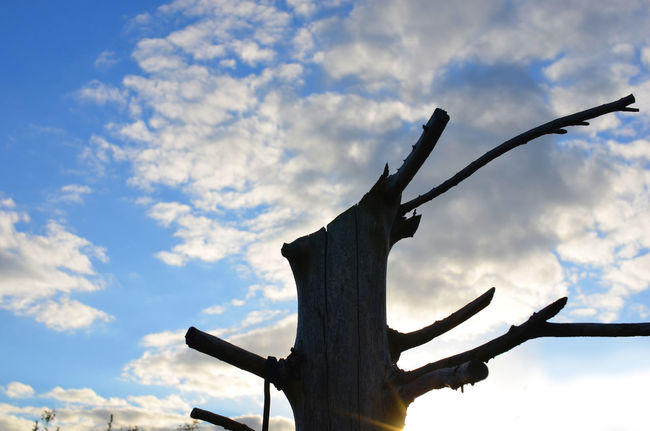 Dead sky against the sky in Scotland Branch Branches Branches And Sky Cloudy Dead Tree Deadtree Deadwood  No People Sky Sunbeams Sunset Tree Tree Branches Trees