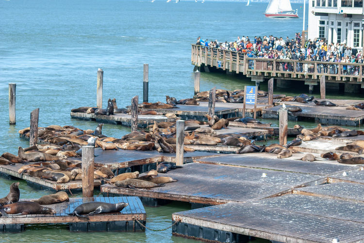 Water Sea Nature Day Nautical Vessel Architecture Transportation Pier Built Structure Land High Angle View Beach Outdoors Moored Travel Destinations No People Harbor Sky Wooden Post Pier 39 Pier 39 Sea Lions