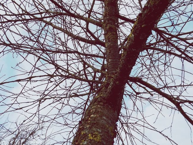 Sky PLZ FOLLOW ME #trees Nature Tree Branch Tree Trunk Bare Tree Sky Close-up