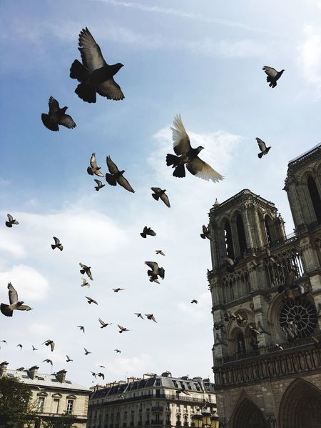At Notre Dame Flying Large Group Of Animals Bird Animal Themes Animals In The Wild Low Angle View Architecture Sky Built Structure Flock Of Birds Animal Wildlife No People Spread Wings Building Exterior Day Outdoors Travel Destinations Travel Travel Photography Notre Dame De Paris Notre-Dame Paris, France  Paris City Pidgeons