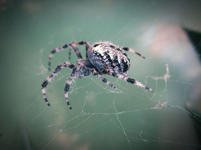 Arachnid Animal