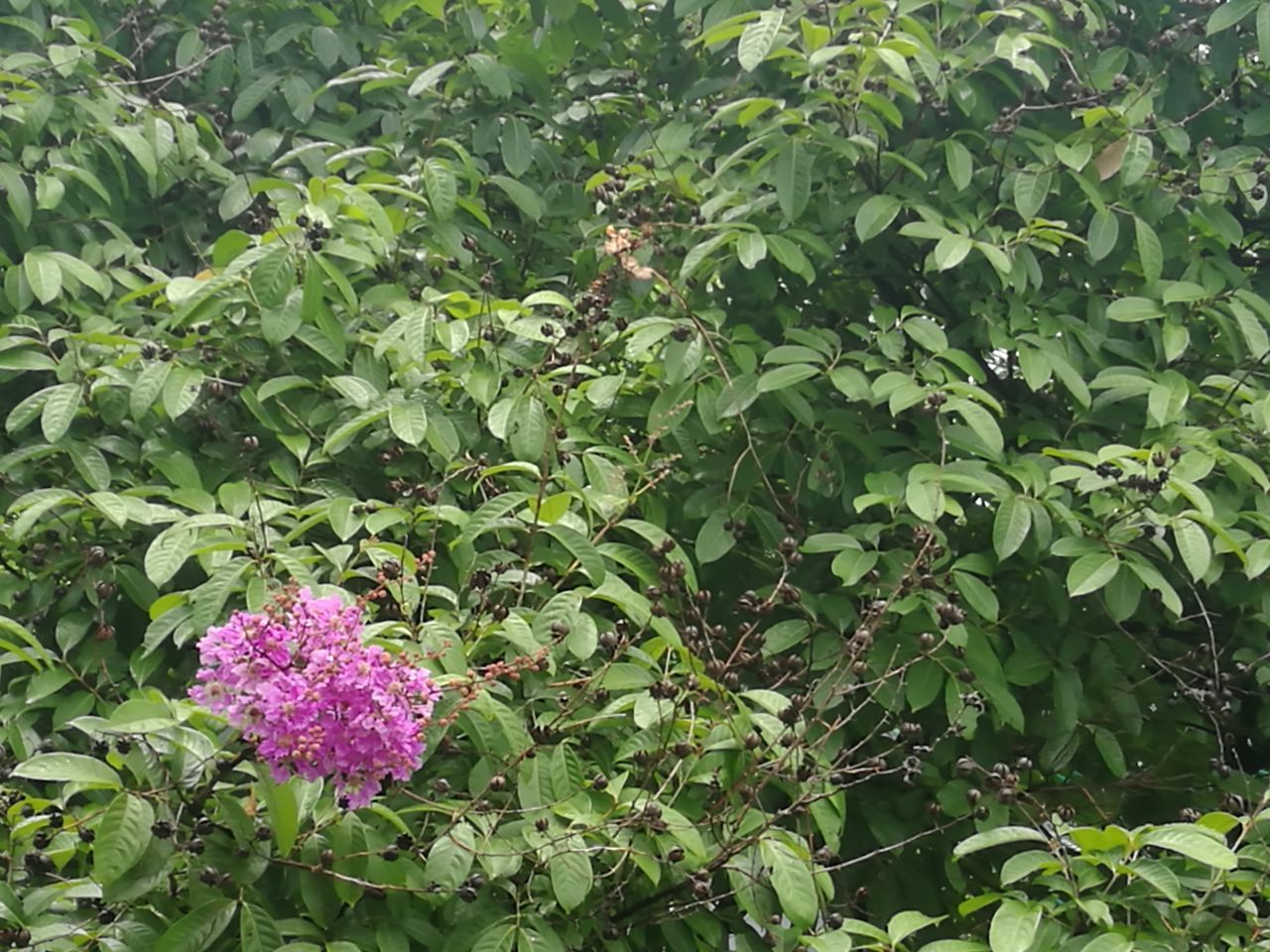 growth, plant, flower, leaf, green color, nature, outdoors, beauty in nature, day, no people, freshness, fragility, blooming, lilac, flower head