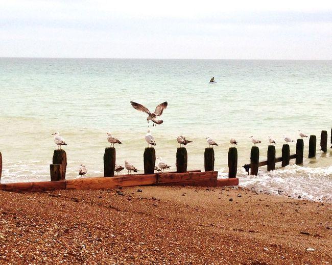 Seagulls Seaside Sea Worthing Beach