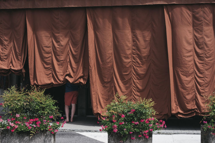 Curtain Day Flower Growth Low Section Men Nature Outdoors Plant Real People Standing