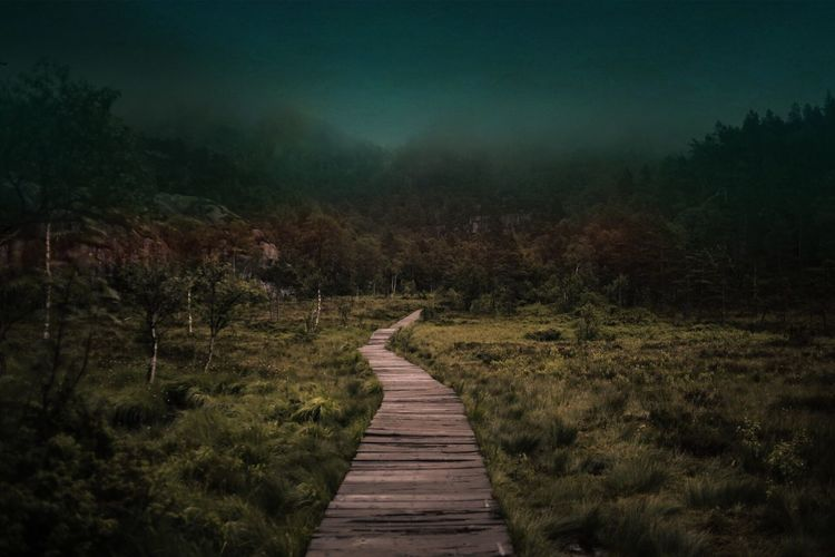 Boardwalk amidst grassy field in forest during foggy weather