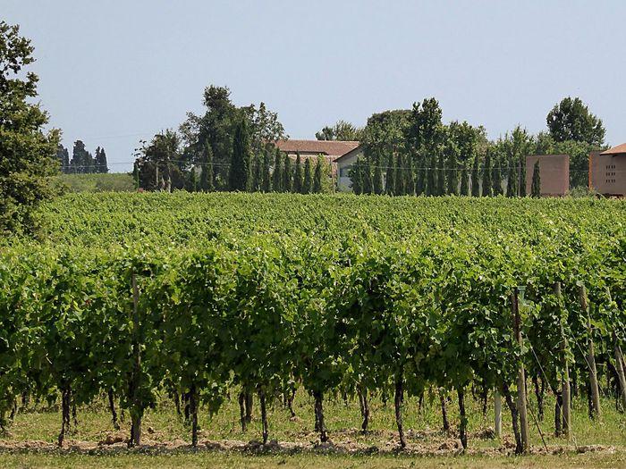 Verona Italy Wineyard Winetasting Buying Wine Walking Around Enjoying The Sun Relaxing Holiday Nature Photography