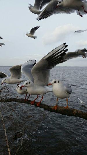 Streit unter den Kolegen Hanging Out Steinhude-am-meer.de - Dein Meer-Foto Animals