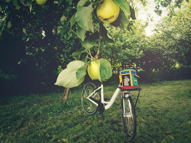 Under the apple tree Tree Fruit Outdoors Grass No People Bicycle Freshness Apples Apple Tree Summer Tour E Bike Electro Bike Meadow Vintage Design Food Plantage Trip Bike Apple Trees Garden Garden Calm Stop Chilling