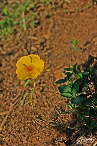 Rebirth Taking Photos Flowers Shillong Meghalaya