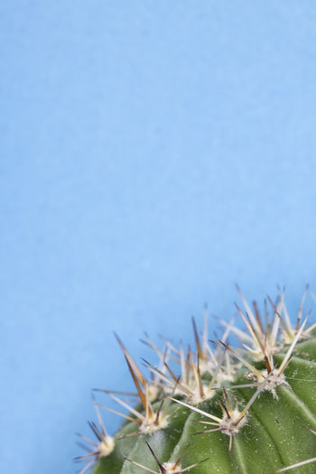 Close-up of cactus against blue sky