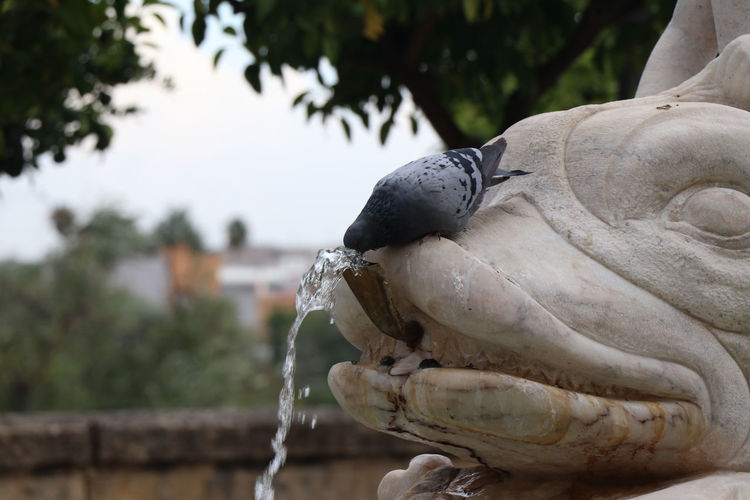 Bird drinking water from a statue Focus On Foreground Statue Close-up Art And Craft Sculpture No People Representation Day Nature Human Representation Creativity Plant Tree Craft Animal Wildlife Outdoors Animals In The Wild Male Likeness