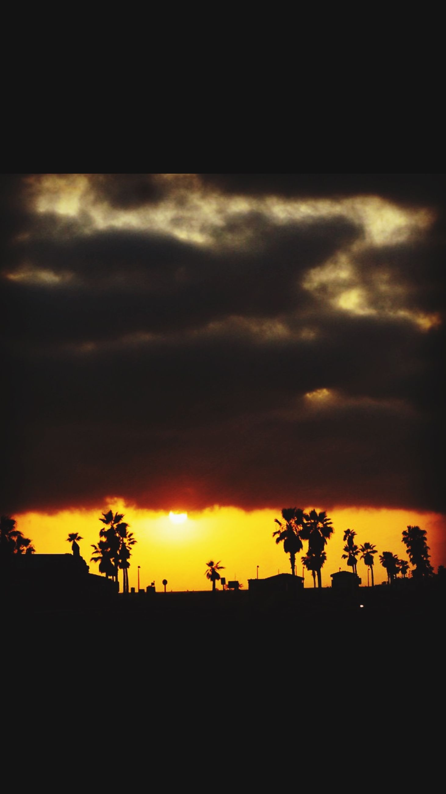 sunset, silhouette, sky, tree, palm tree, beauty in nature, tranquil scene, scenics, tranquility, cloud - sky, orange color, nature, idyllic, dramatic sky, cloud, cloudy, growth, landscape, outdoors, moody sky